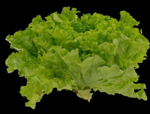 3D model of food